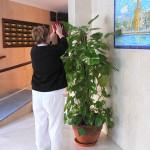 Mantenimiento y limpieza de escaleras, rellanos y plantas en Comunidad de Vecinos de Triana (Sevilla)